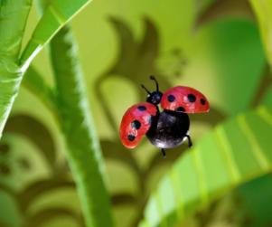 BT STILLS 103-Ladybug04c